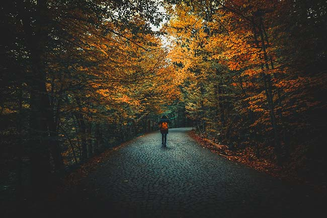 Taking a Walk During Autumn