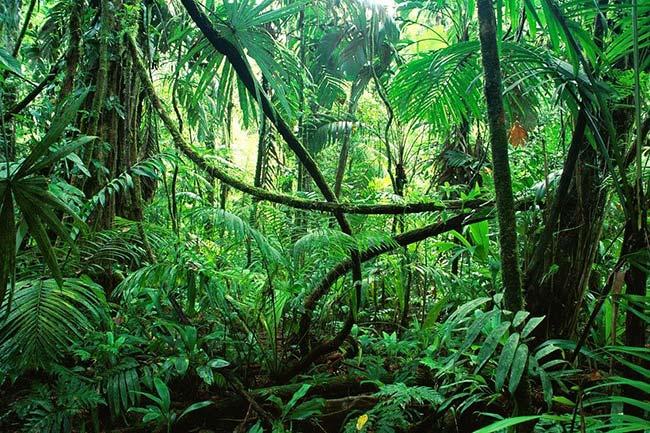 Thick Jungle Terrain