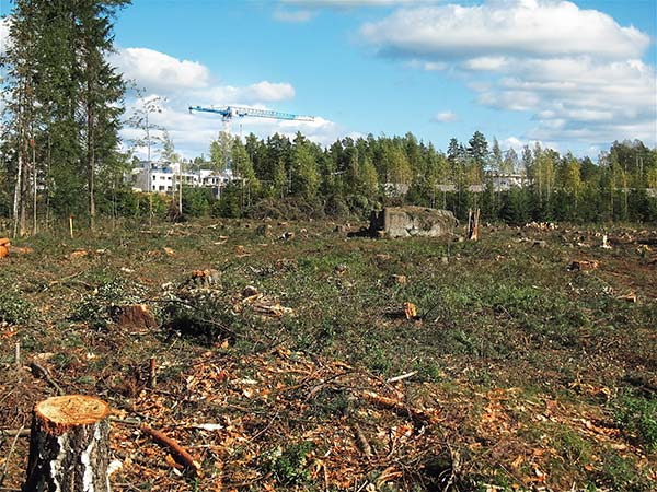 Deforested Field