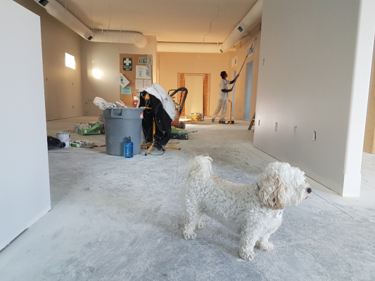 White Dog with Decorator