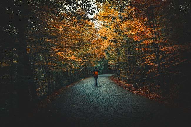 Taking a Walk During Autumn