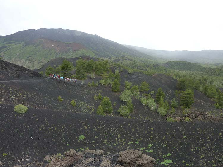 Vineyard on Mount Etna